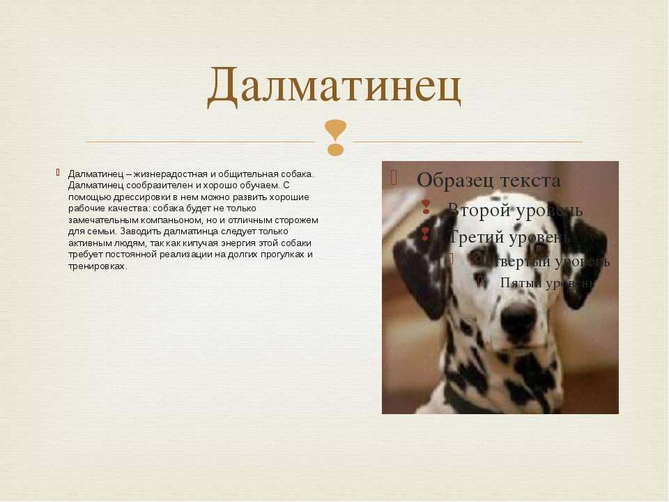 Собака какой породы снималась в фильме бетховен