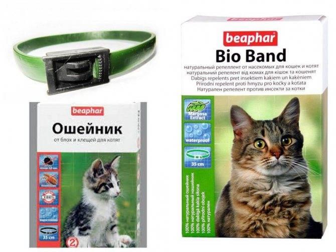 Ошейник от блох и клещей для кошек: как действует, инструкция по применению