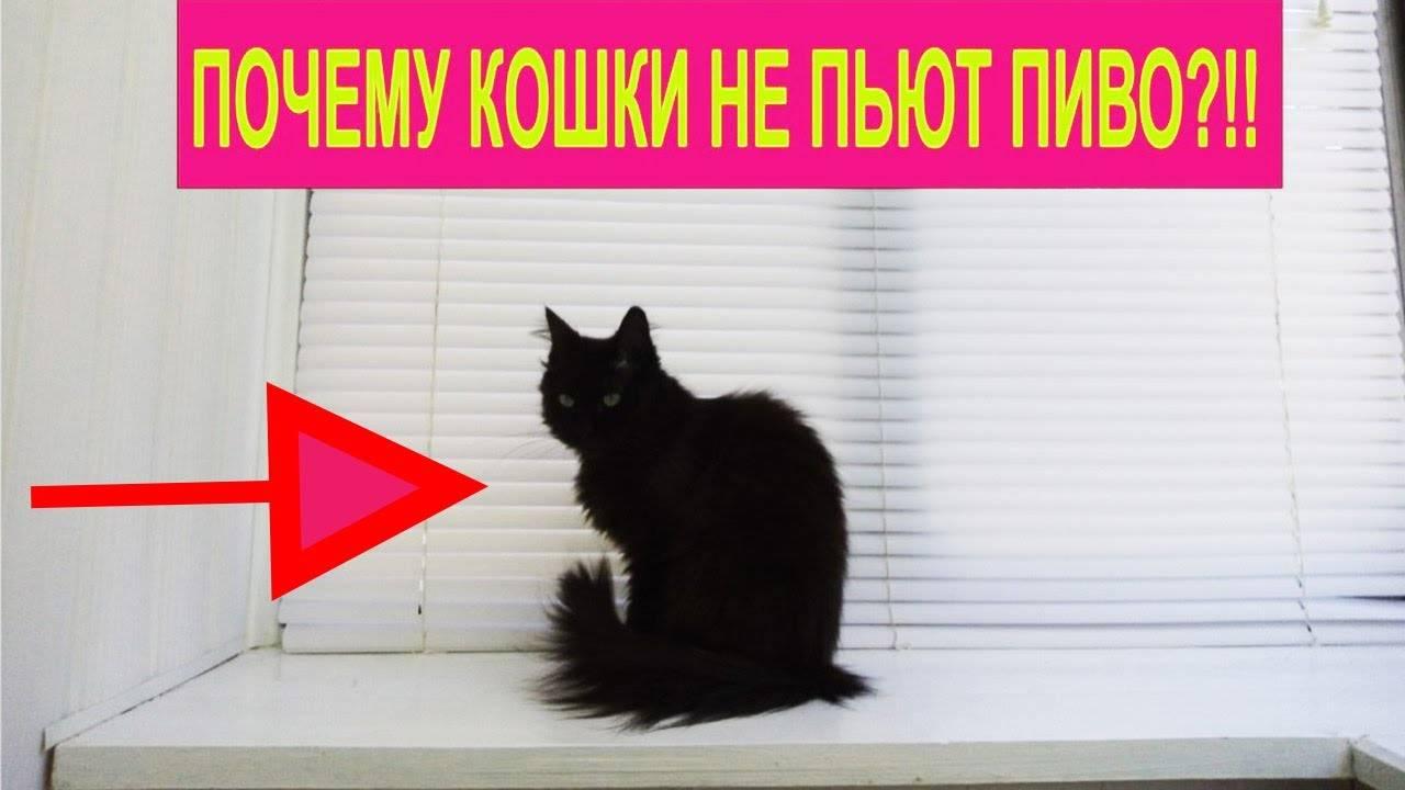 Признаки того, что кошке скучно