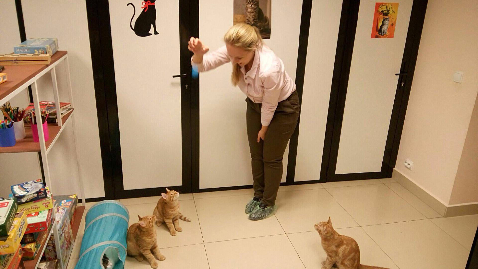 Кафе, куда пускают с животными в спб, можно приходить с собаками - 32 места