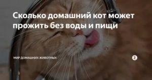 Сколько кот может не есть при болезни