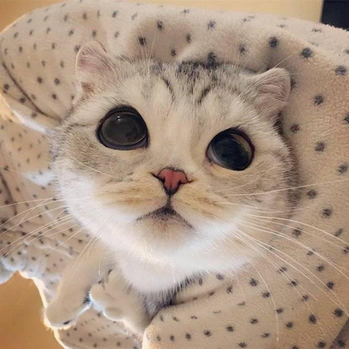 Самые красивые кошки и коты в мире | фото с названиями, породы