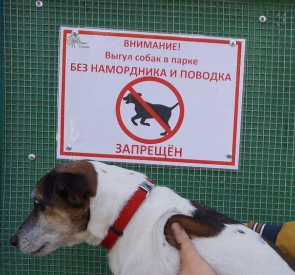 Штраф за выгул собак в неположенном месте в 2020 году - какой, административная ответственность