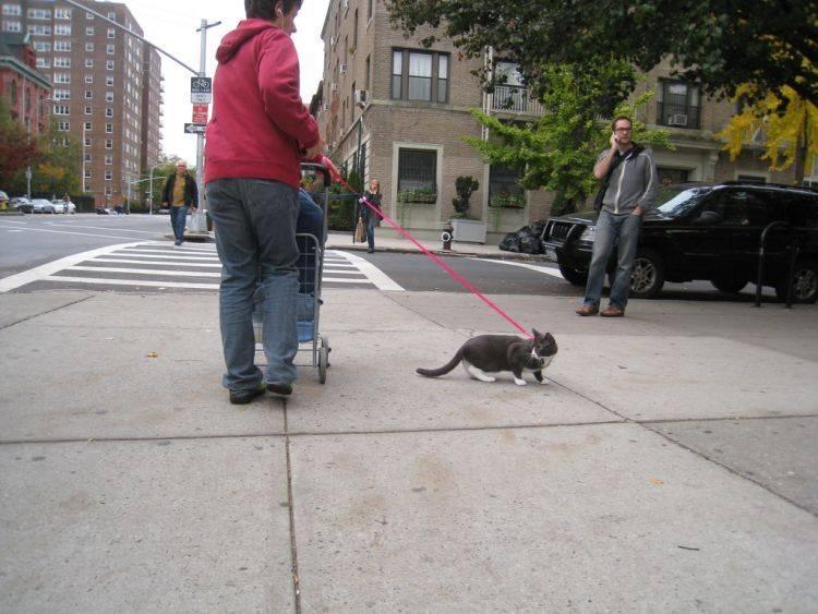Как отучить кошку от улицы