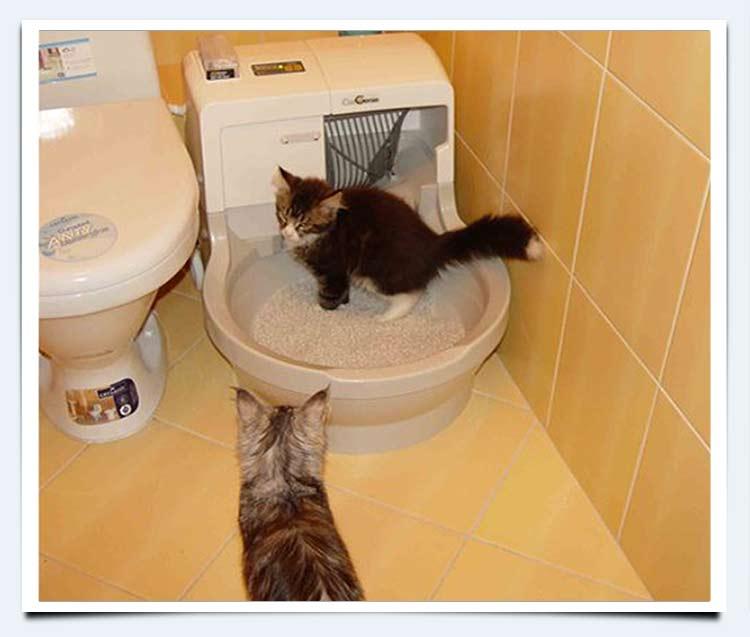 Как отучить котёнка сосать свой сосок?