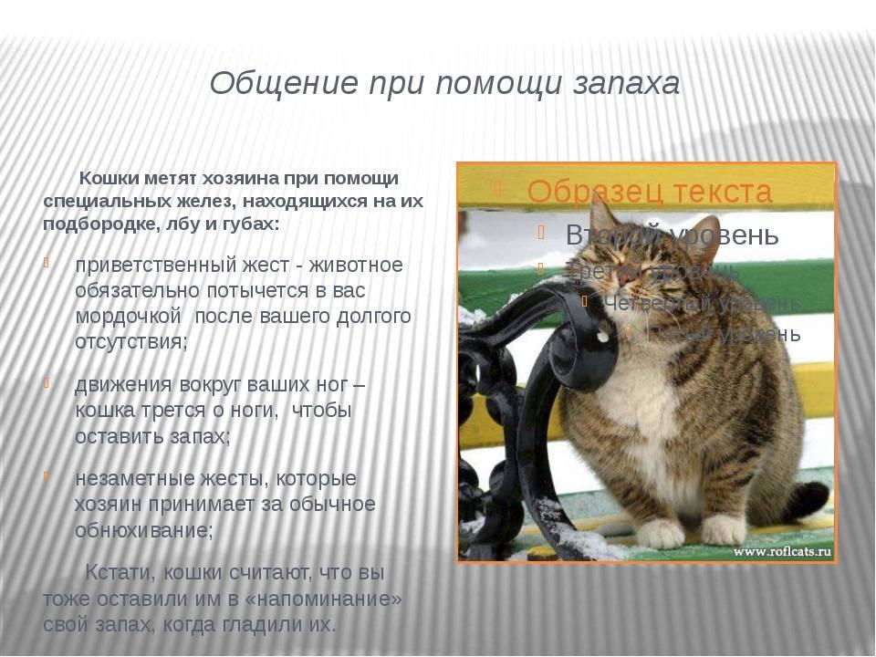 Кошка шипит: основные причины агрессии