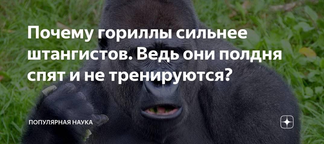 Почему гориллы сильнее штангистов. Ведь они полдня спят и не тренируются?