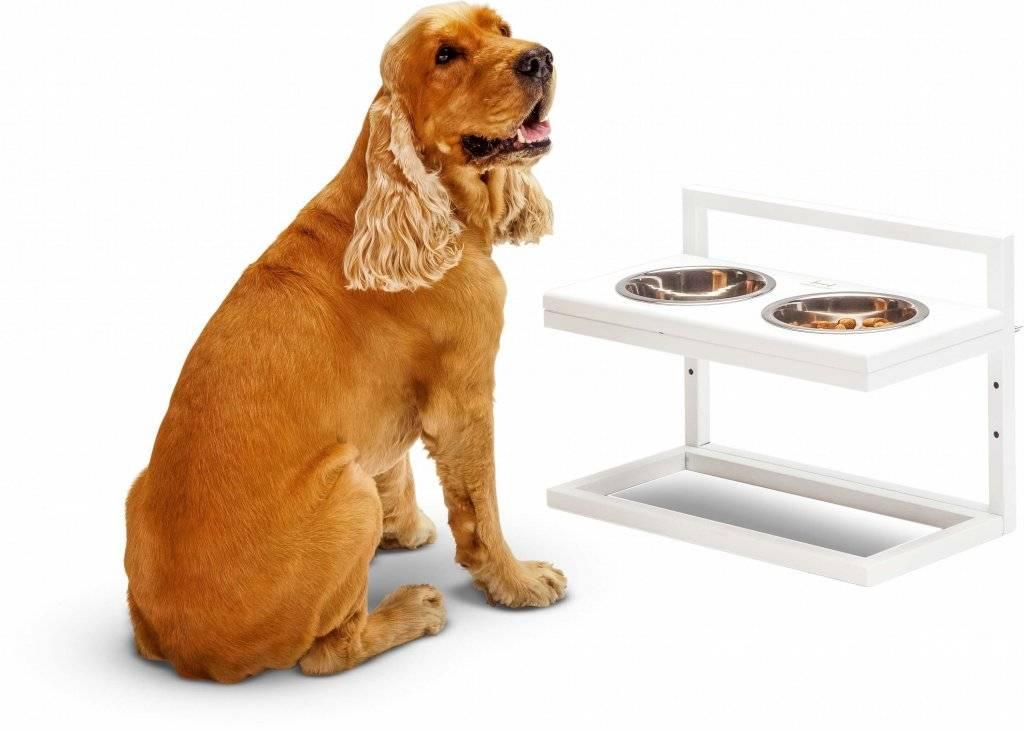 Миски для собак: как выбрать и где разместить?