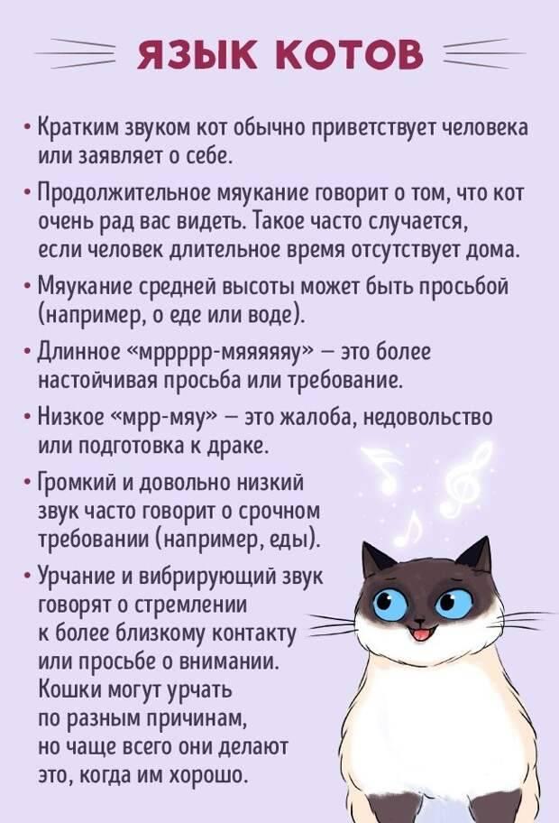 Как определить, что кошка больна: 18 признаков ~ коточек