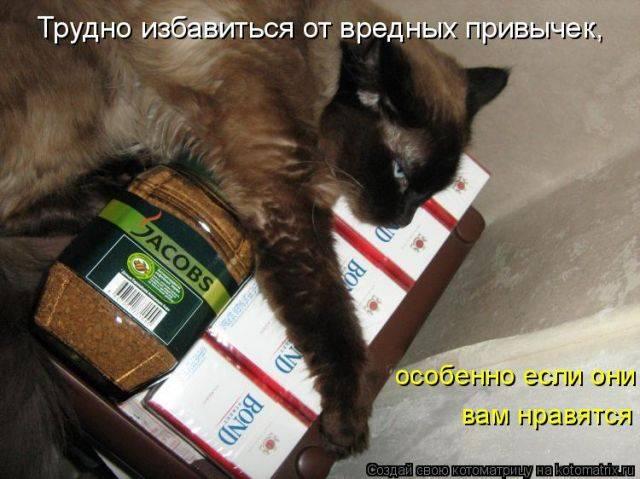 8 продуктов вредных для кошек