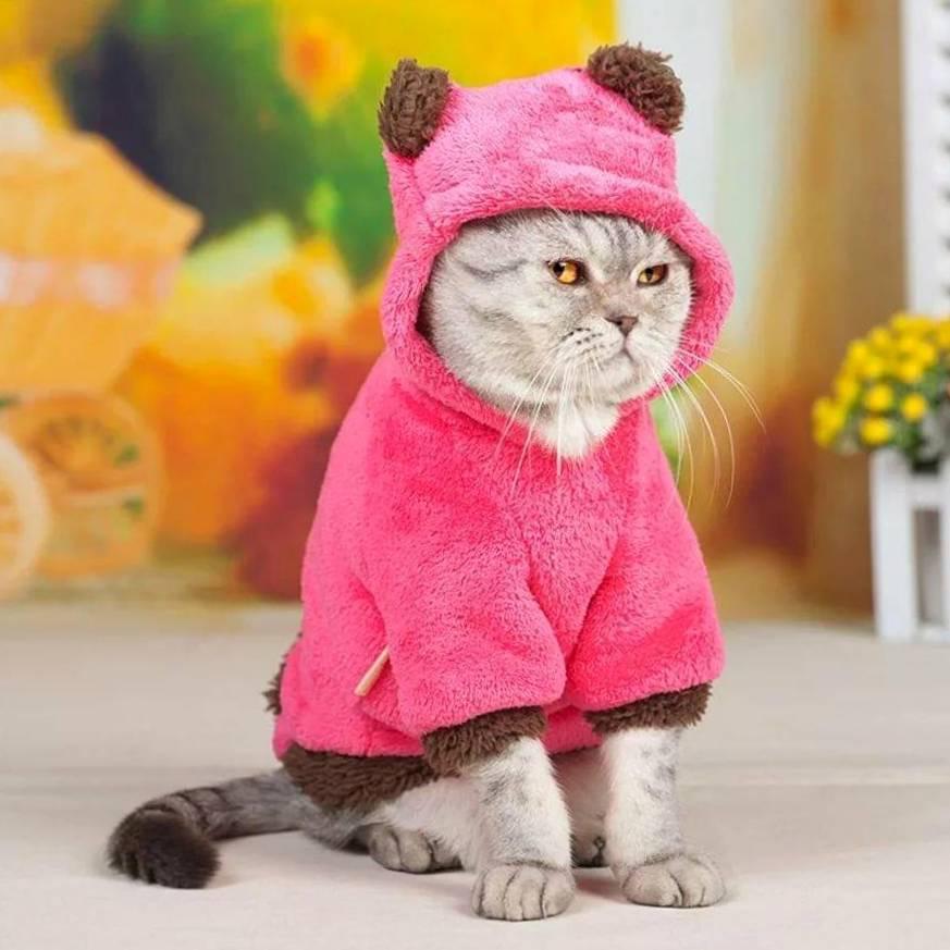 Функции одежды для кошек, правильный выбор, варианты выкройки и пошива
