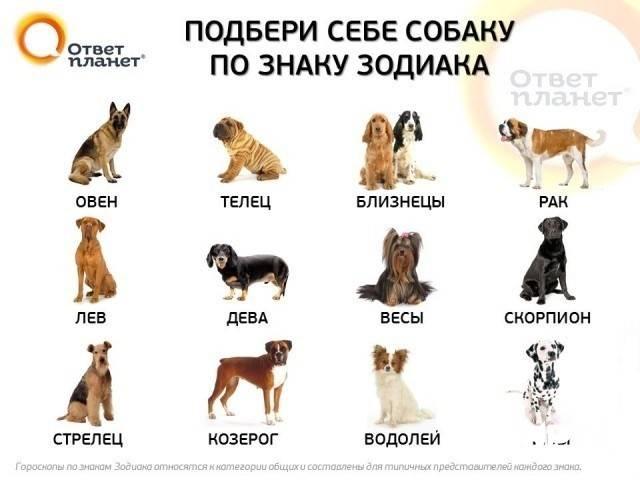 Клички и имена для собак мальчиков: легкие и красивые