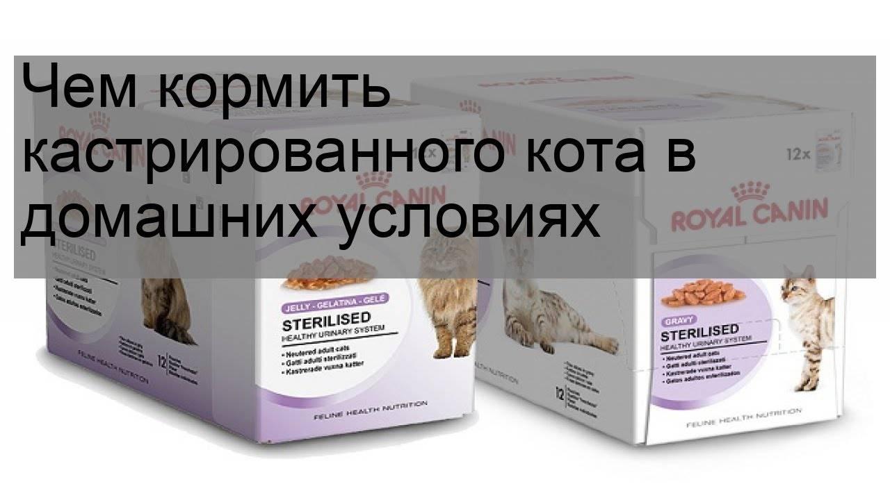 Питание для кошек и котов: сбалансированный рацион, корма или натуралка...