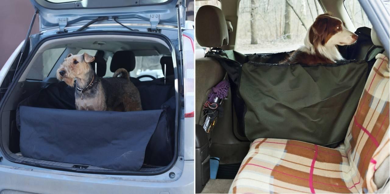 Перевозка собак в машине: правила и особенности