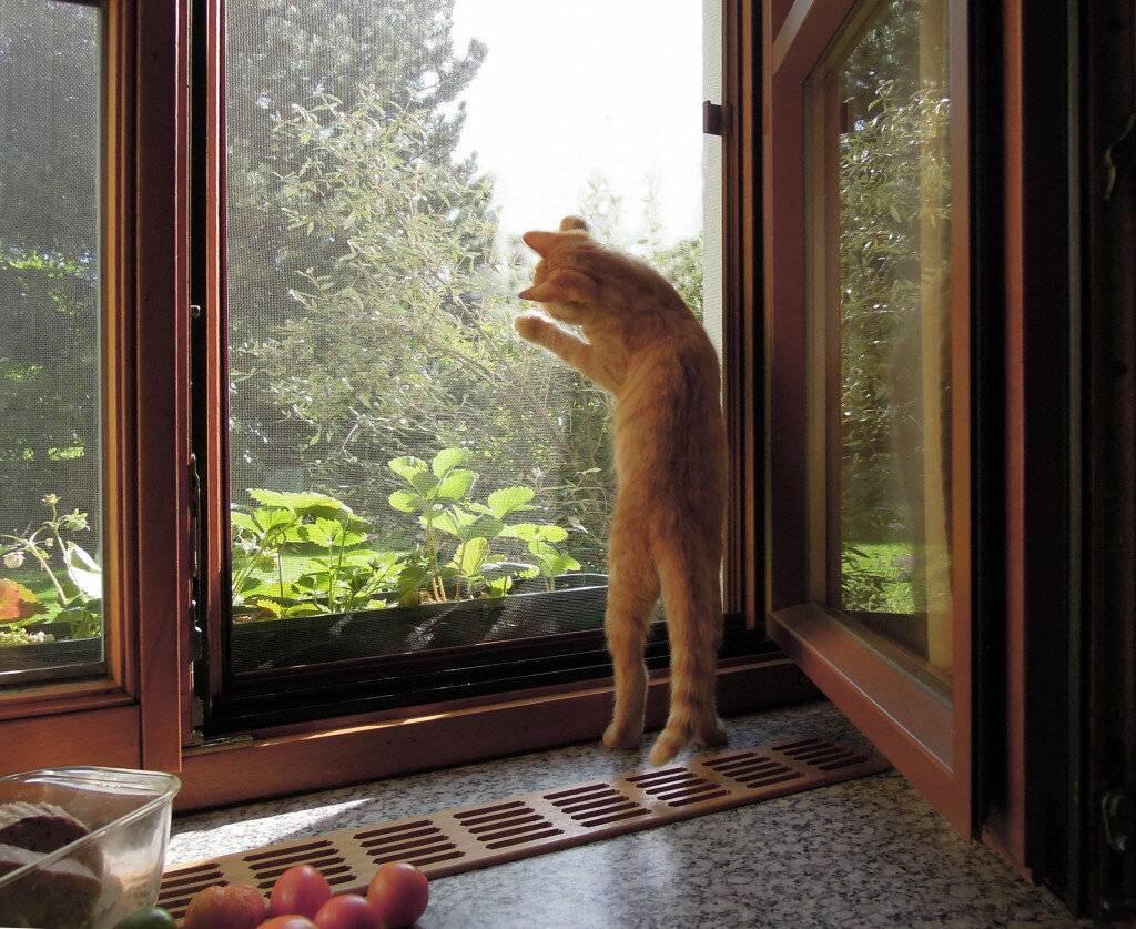 Входная дверь, холодильник, кран - что еще легко могут открыть ваши кошки
