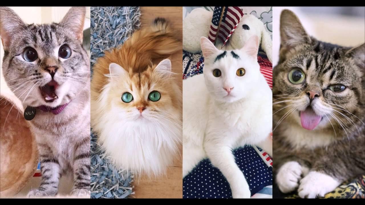20 самых известных котов в мире: фото