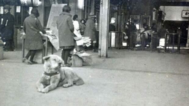 Хатико, преданный пес.