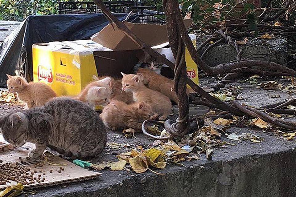 Черноногая кошка: малютка сеет смерть. котик-терминатор, что эффективнее тигра