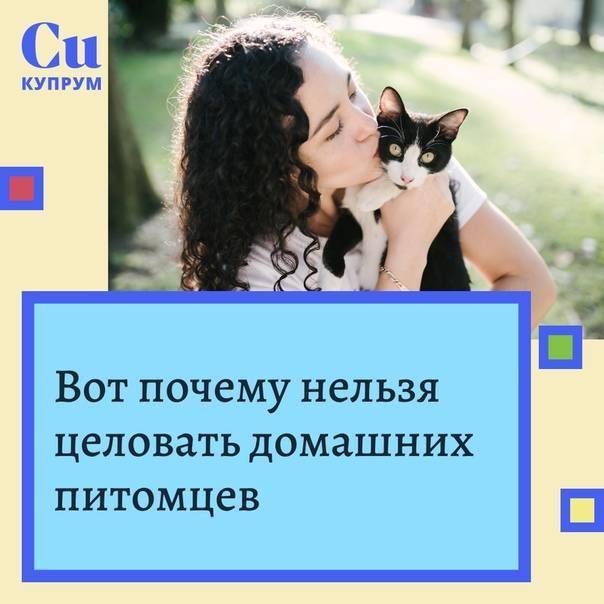 Скрытая опасность или почему нельзя обнимать котов и кошек