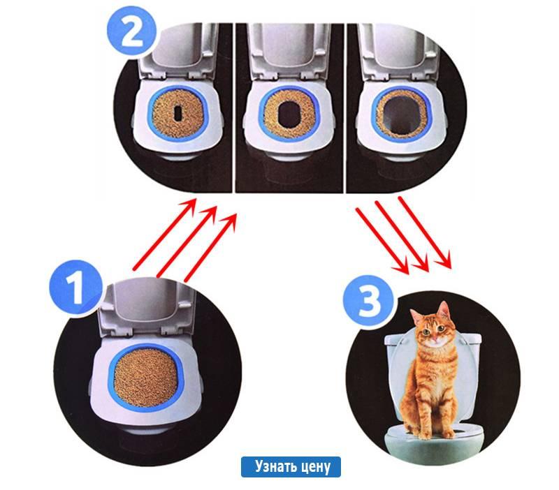 Накладка на унитаз для кошек: приучение, разновидности