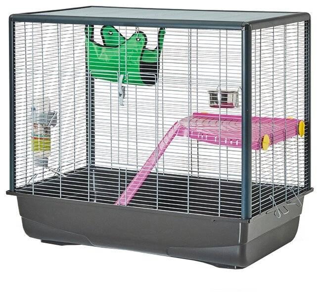 Содержание крысы в домашних условиях: все об уходе за декоративными грызунами