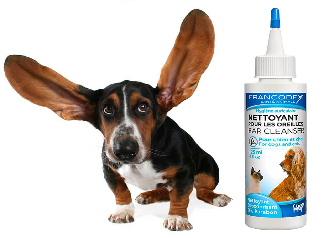 Чистка ушей у собак - правила, средства для чистки ушей у собак
