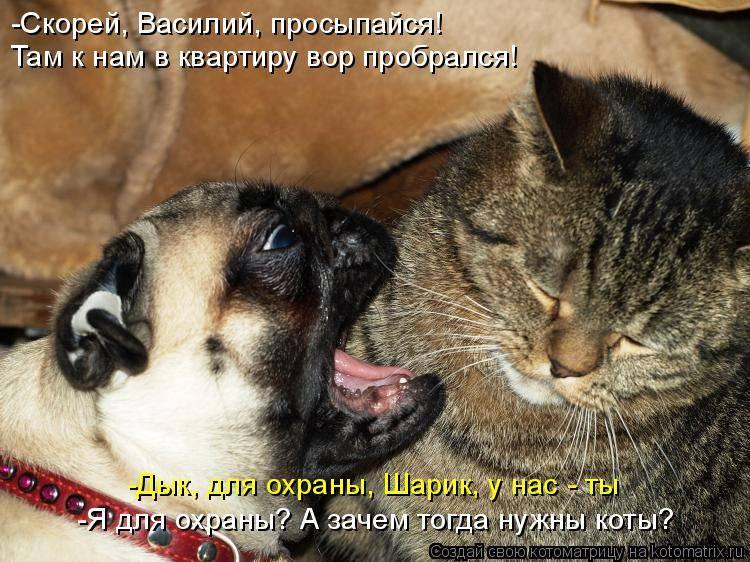 Почему кот, кошка или котенок постоянно много ест, но не наедается и просит добавки даже после еды?