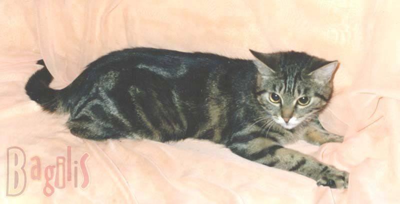 Какие 7 причин говорят о том, что беспородная кошка лучше породистой