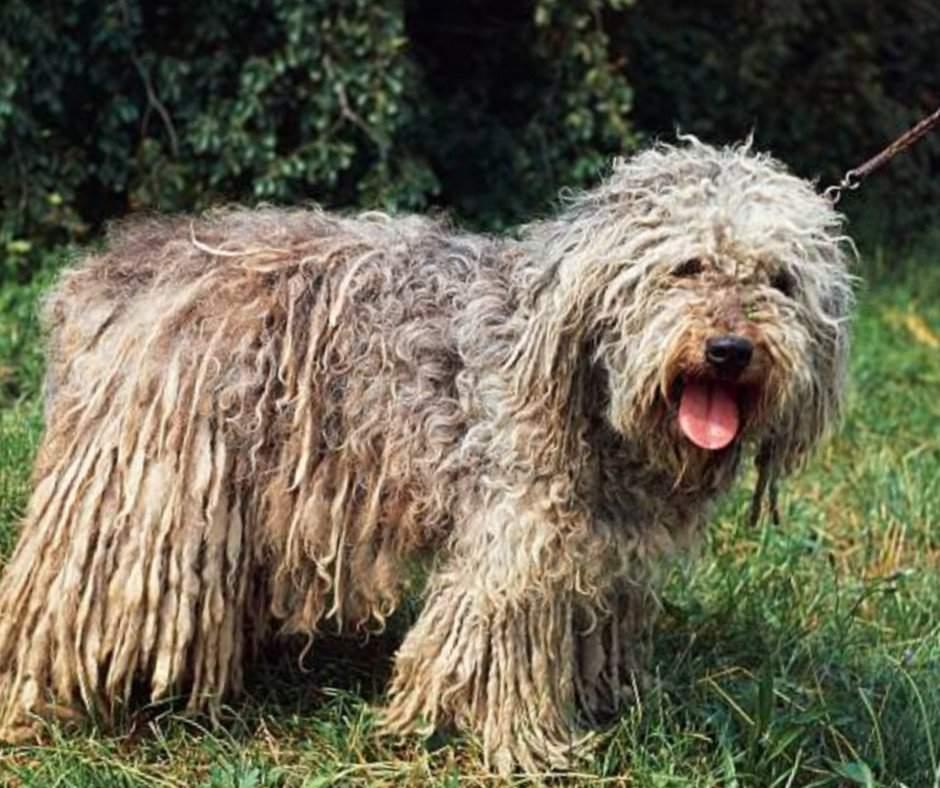 Топ-15 пород самых маленьких собак с фото