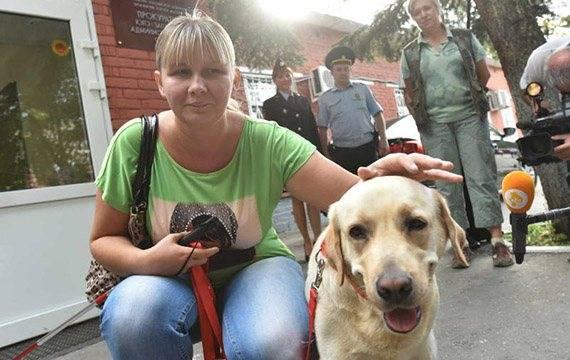 Собака поводырь. породы и обучение собак поводырей | животный мир