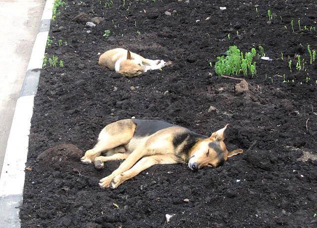 Захоронение домашнего животного у православных: можно ли хоронить на кладбище или нет, особенности процедуры