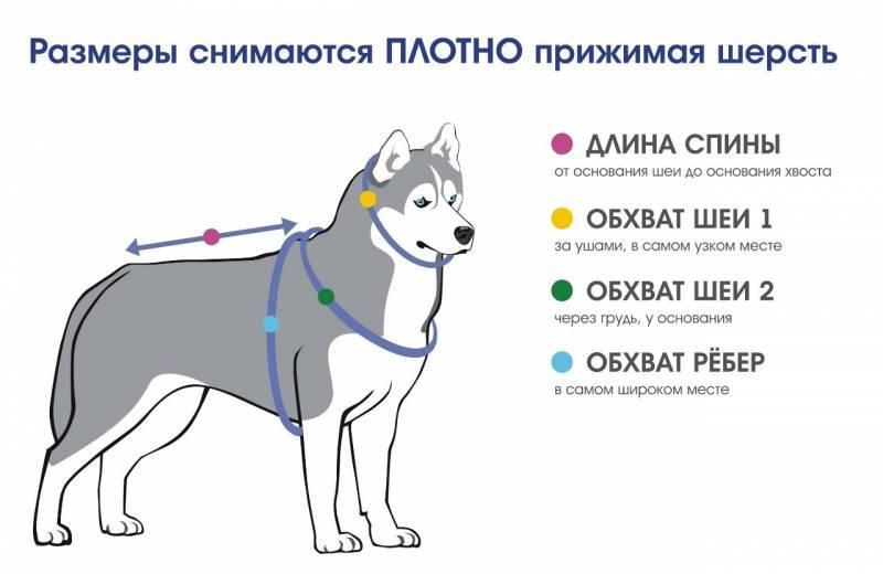 Как одеть шлейку на собаку правильно