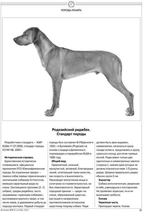 История происхождения, внешность и отличительные характеристики собаки прайтер