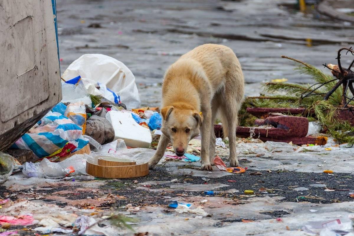 История о том, как кот съел полиэтиленовый мусорный пакет и остался жив