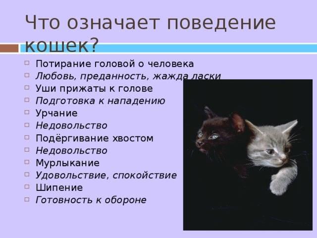 Психология и поведение кошек