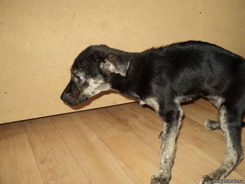 Причины, симптомы и методы лечения энтерита у собак