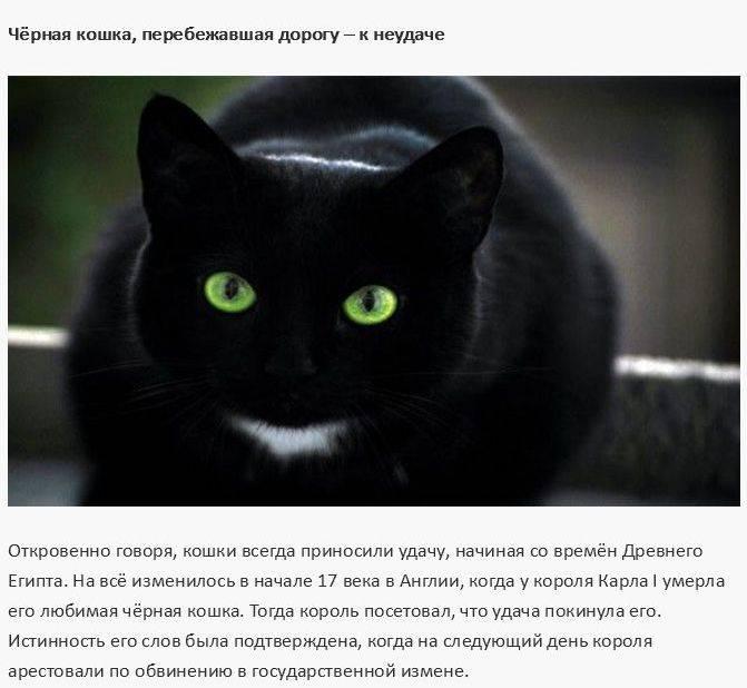 Так ли страшна черная кошка? приметы и суеверия о пушистой мурлыке