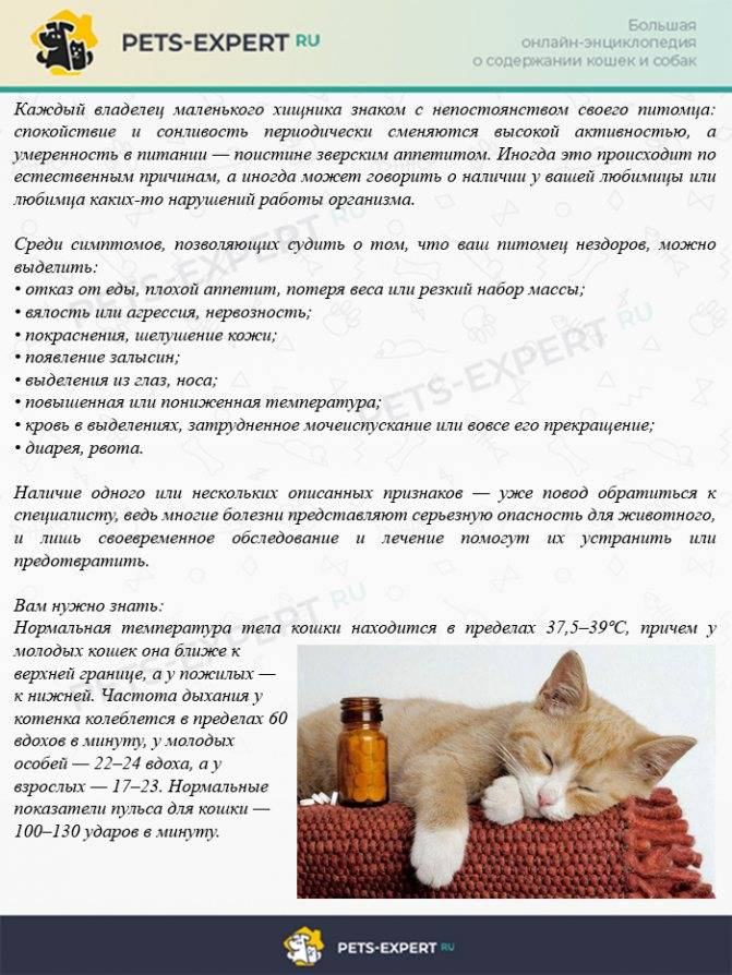 Пищевое отравление у кошек: список опасных продуктов, первые симптомы, лечение, меры профилактики