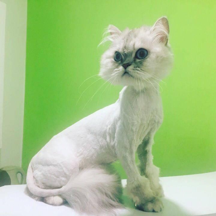Как подстричь кошку и кота в домашних условиях
