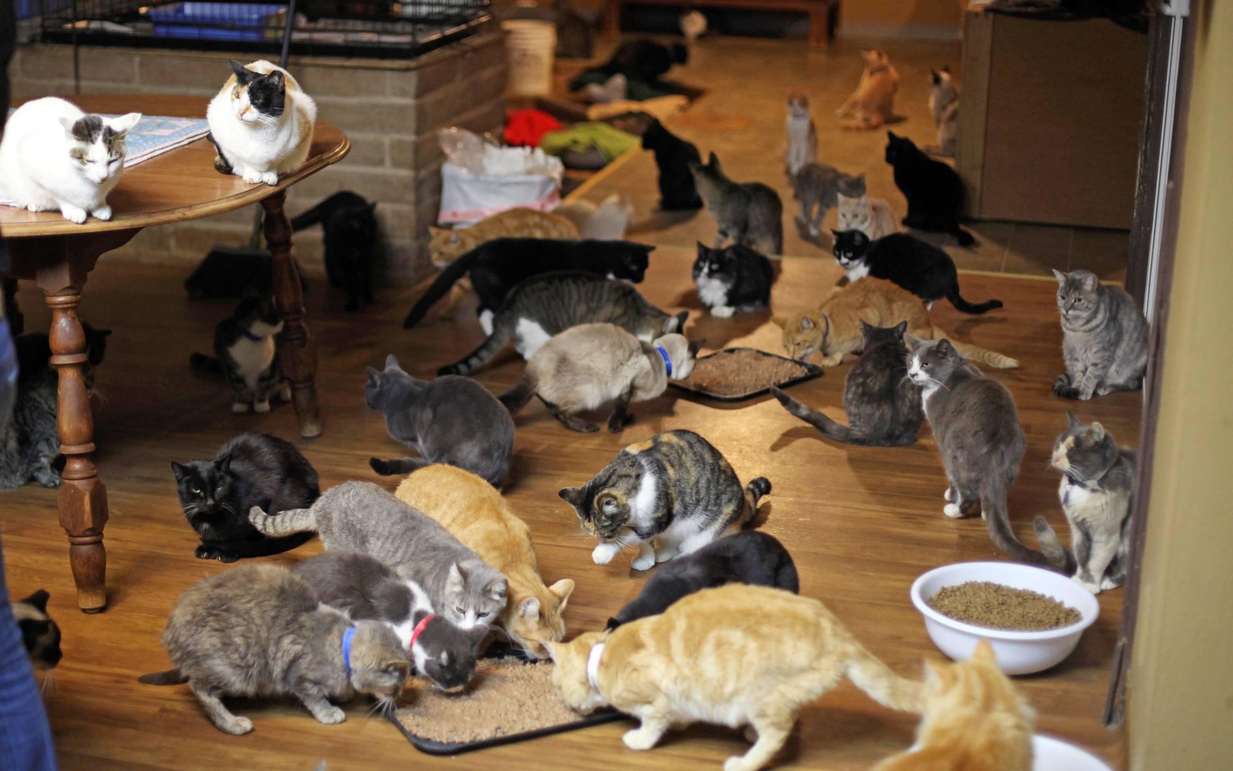 Какую кошку лучше завести в квартире для ребенка?