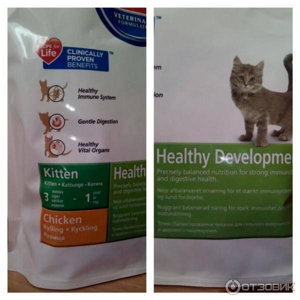 Сколько раз в день кормить кошку и какими порциями корма | hill's pet
