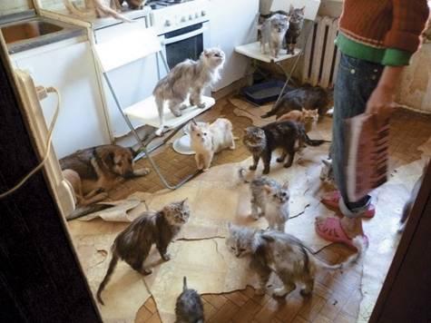 Чего не хватает кошке в городской квартире
