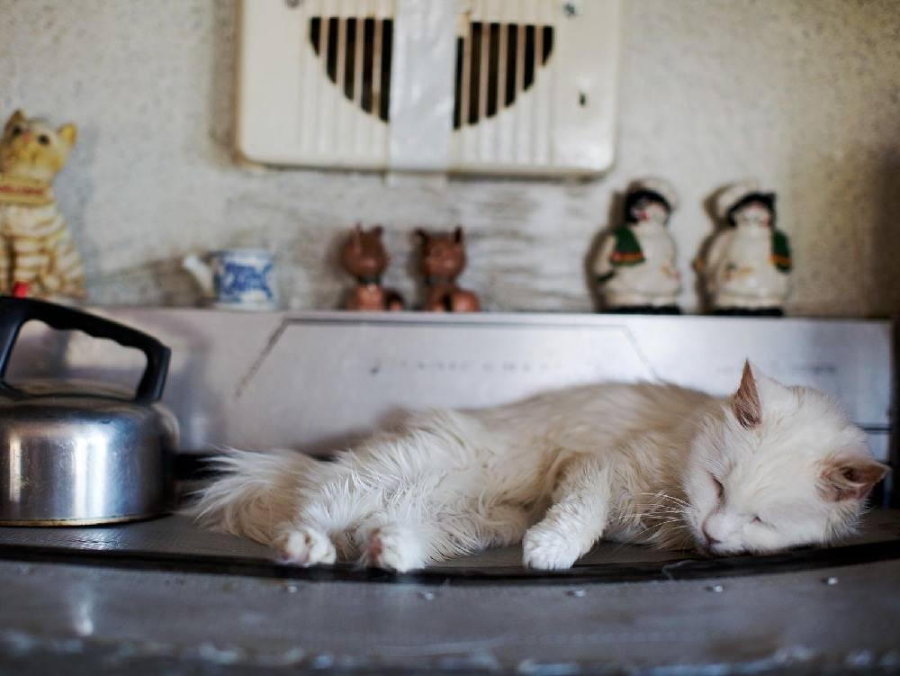 Как по поведению кошки можно узнать отношение домашнего питомца к гостю