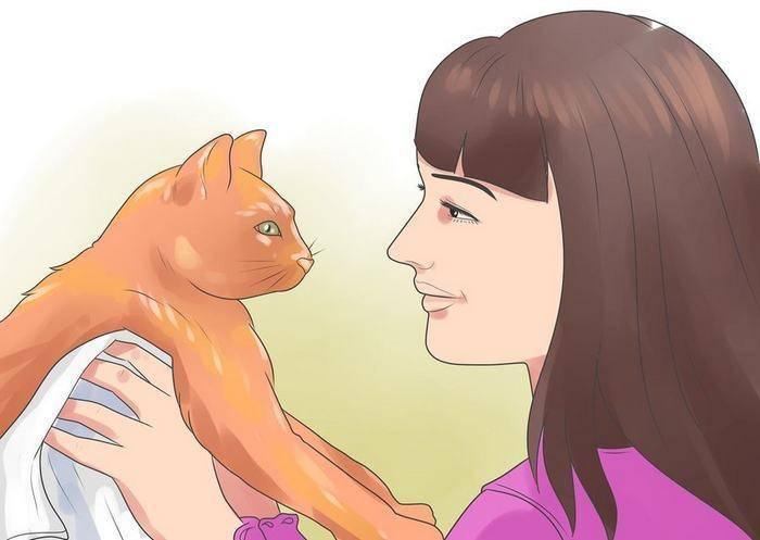 Как можно приучить кошку к рукам?
