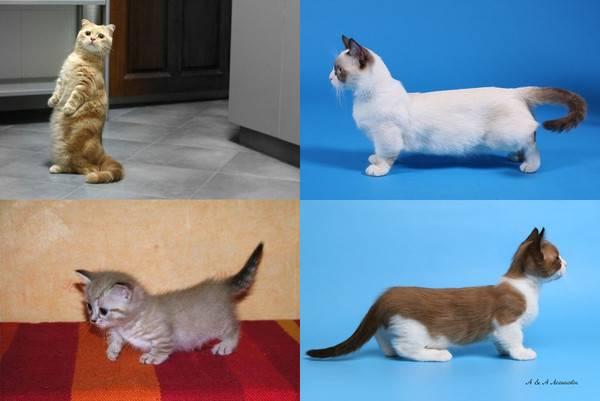 Кот или кошка – кого лучше выбрать, чтобы завести в квартире