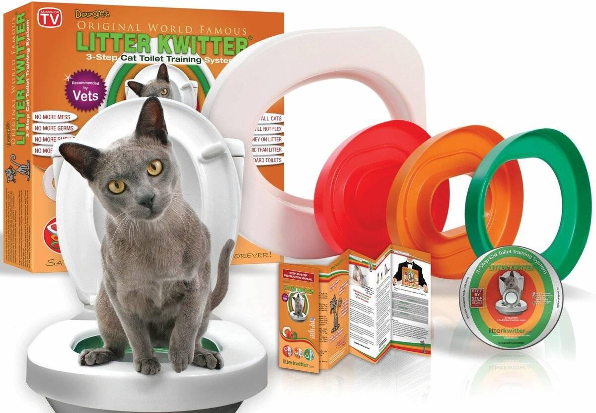 Как приучить кошку или кота к унитазу?