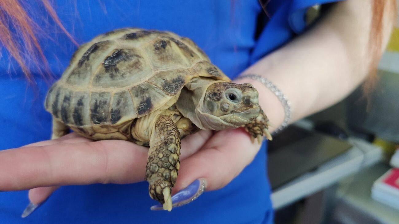 Сколько лет живет черепаха в домашних условиях