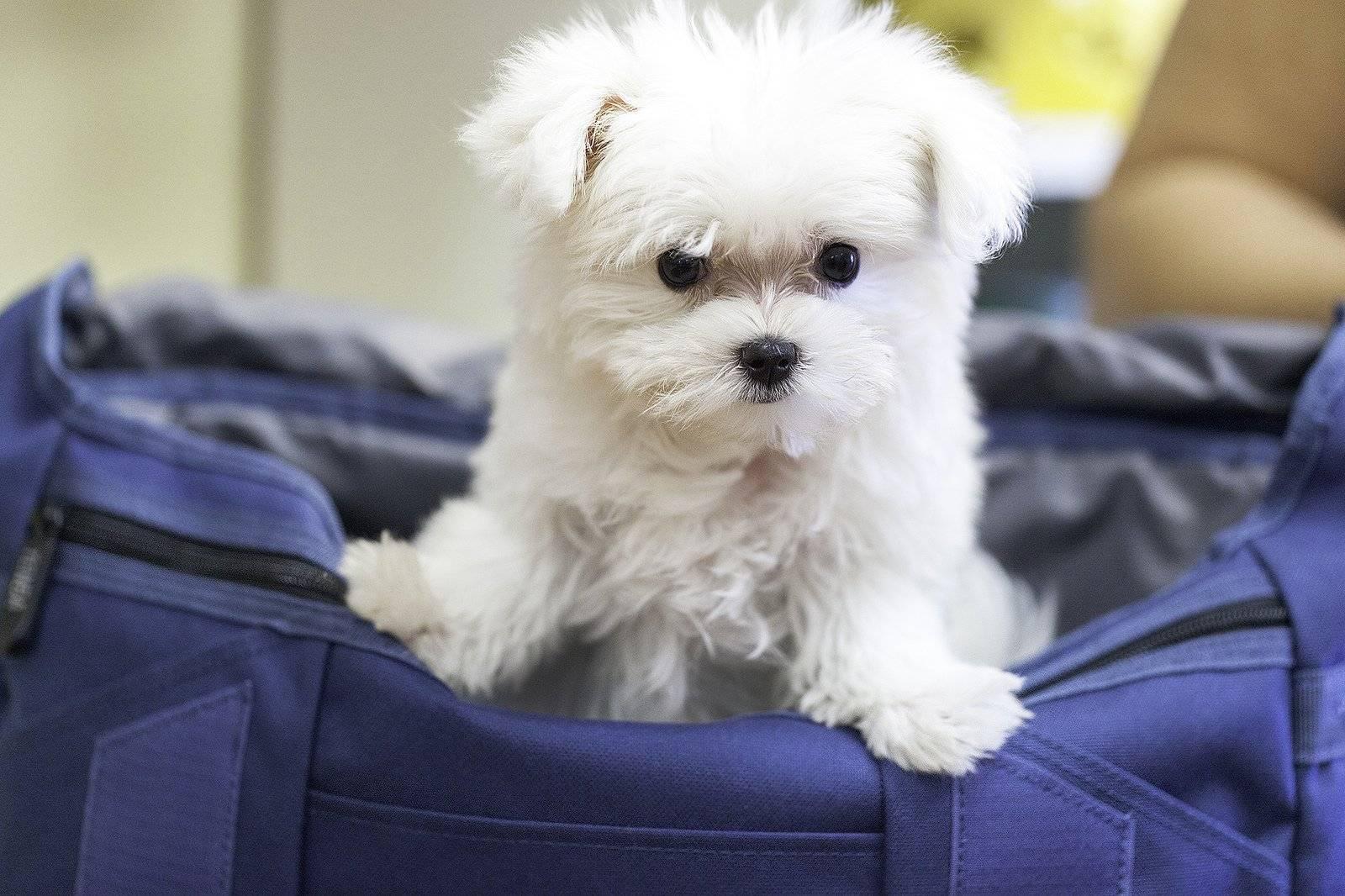 Домашние собаки