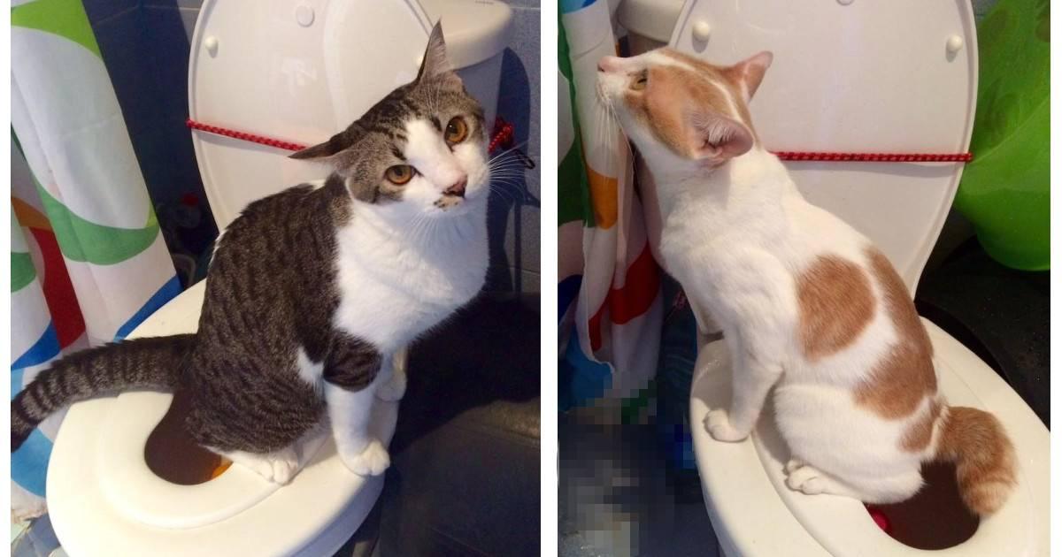 Вся правда о цистите у кошек и котов