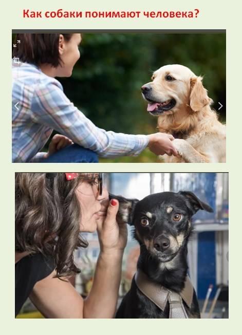 Собачий язык: каким образом собаки общаются с хозяином и понимают ли они его?